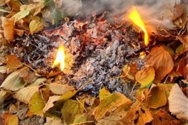 Чим шкідливе спалення сухого листя